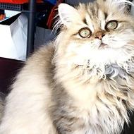 NICE CAT'S JASMINE