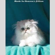 Made In Heaven's Jillian