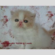 Soleiadou Lady Toffee