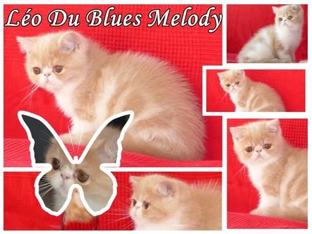 Poils courts - Léo Du Blues Melody