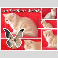 L�o Du Blues Melody