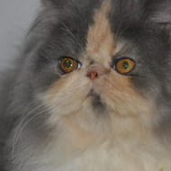 Maïva Chapy Cat's (A reserver)