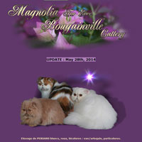 Magnolia-Bougainville - Bougainville Persians